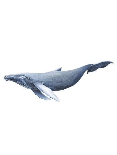 Humpback Whale - Original