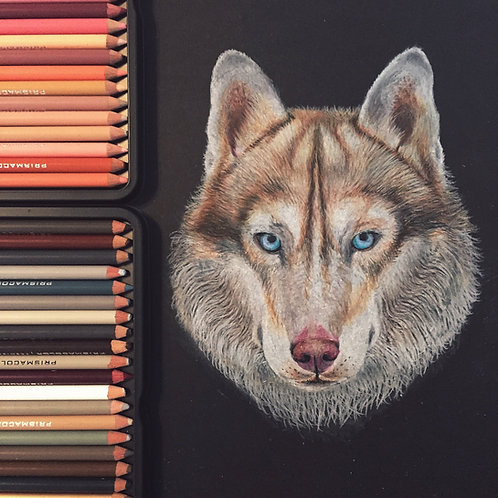 Brown Siberian Husky