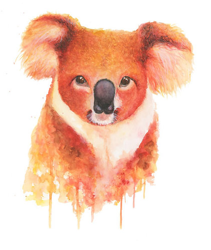 Koala bear - Original