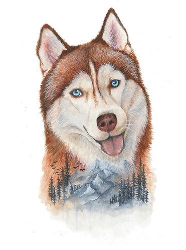 Siberian Husky - Original