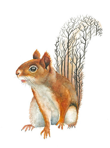 Squirrel - Original