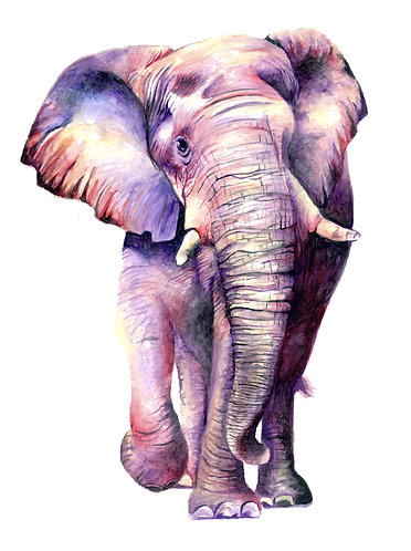 Butterfly colored Elephant - Original