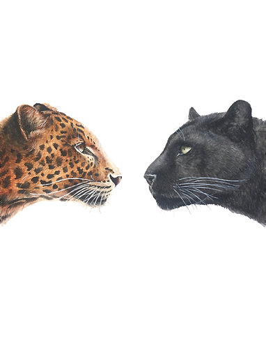 Leopards - Original