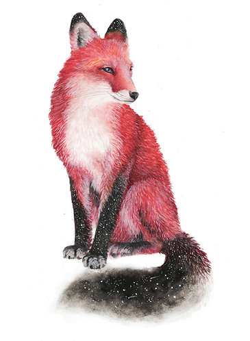 Red Fox - Original