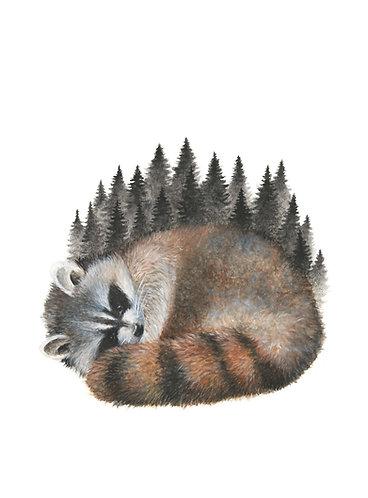 Sleeping Racoon - Original