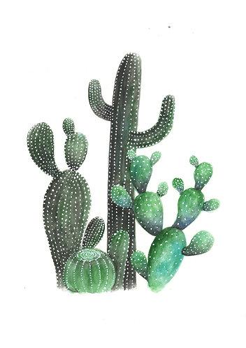 Cactus - Original