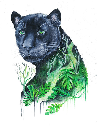 Panther´s  Jungle