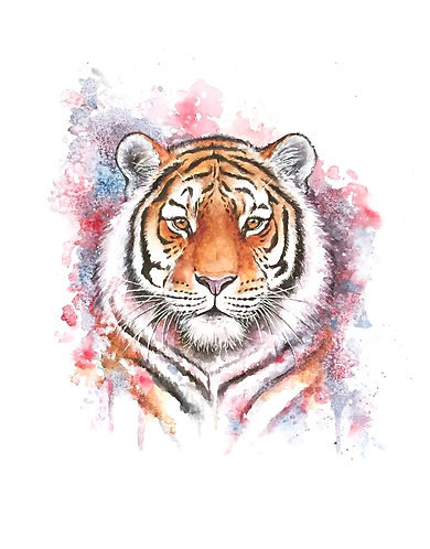Tiger - Original
