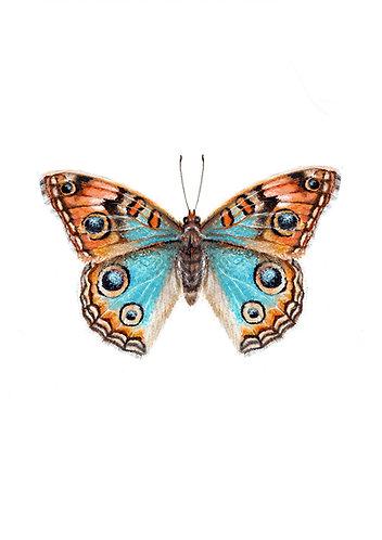 Butterfly - Original
