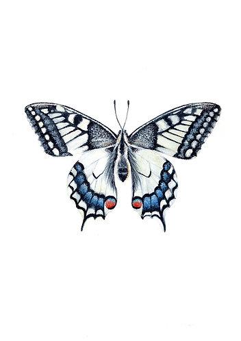 Butterfly (Swallowtail) - Original