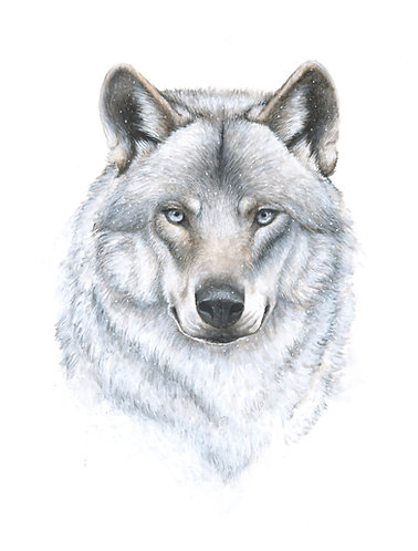 """Winter II"" Wolf - Original"