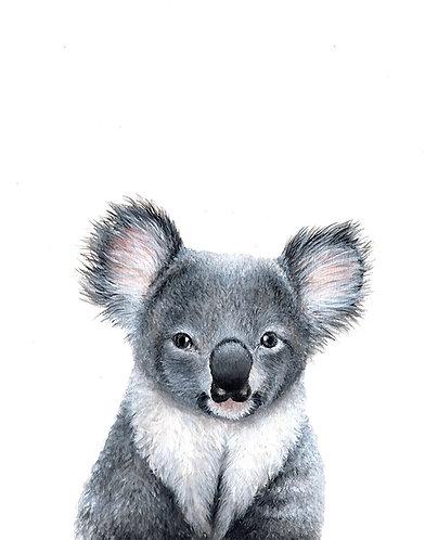 Coala Portrait