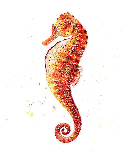 Seahorse - Original