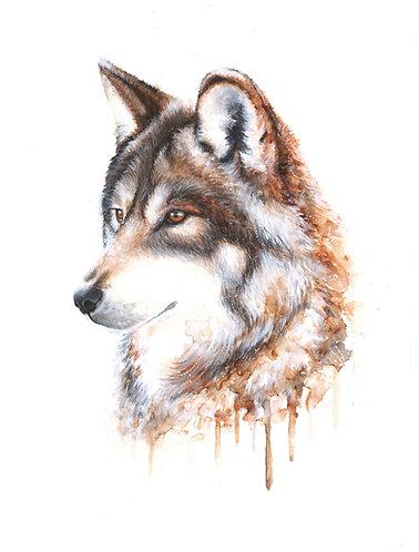 Brown Wolf - Original