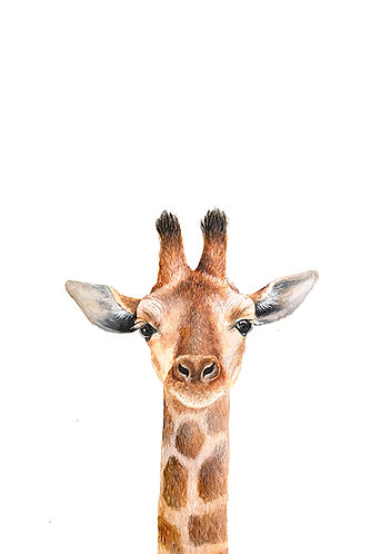 Giraffe Portrait - Original