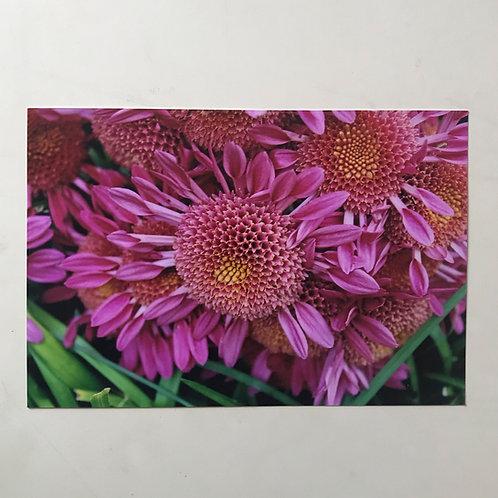 Pink Flowers - Atlanta, GA
