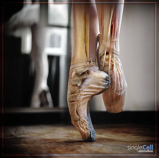 POINTE ANATOMY