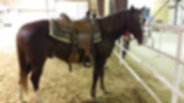 Full Care Horse Boarding, Self Care Horse Boarding, Partial Care Horse Boarding,