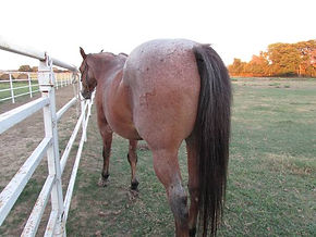 Full Care Horse Boarding, Self Care Horse Boarding, Partial Care Horse Boarding,