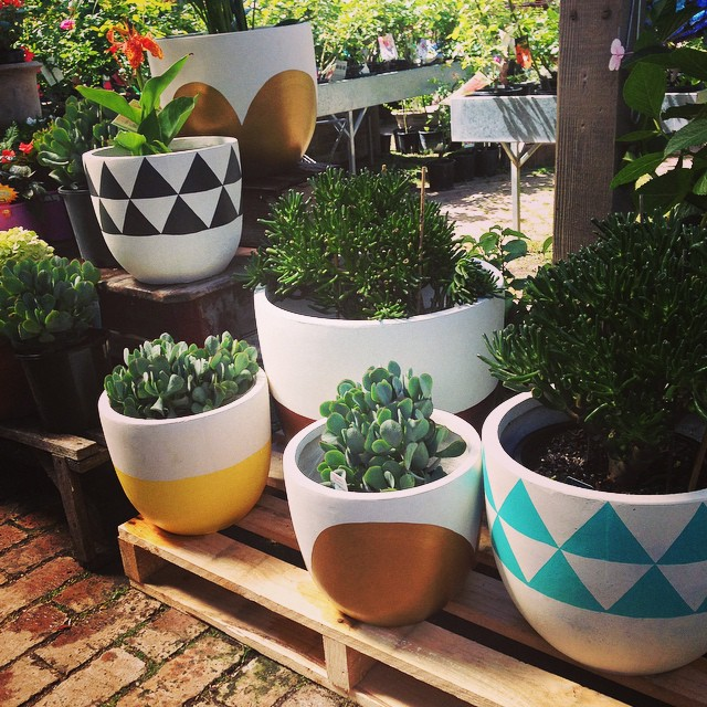 Instagram - Yay! Our @popandscott pots have arrived!!! Ultimate Christmas gift f