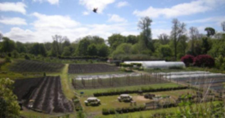 IH Garden.jpg