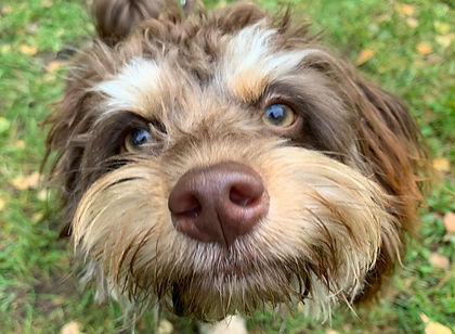 Hundeschule Havaneser.jpg
