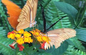 lovelybutterflies.jpg