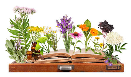 Medical plants with old books and letter