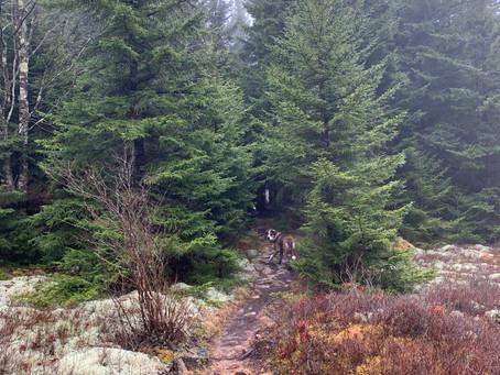 Social Distance in the Wilderness - by Brett Sherwood