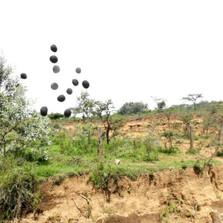 Seedballs kenya love erosion throw and grow ----.jpg
