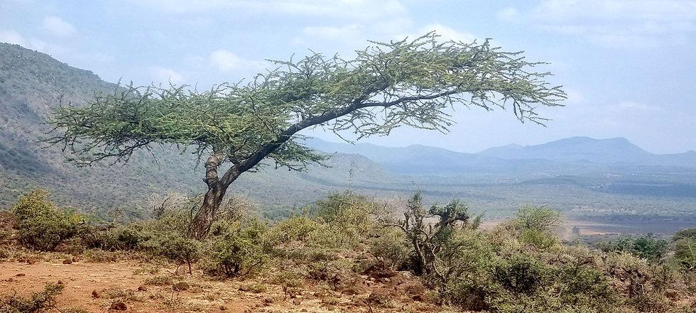 Great Rift Valley - Seedballs kenya - Amy Sandys-Lumsdaine--.jpg