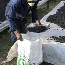 Seedballs Kenya - reforestation, deforestation, environment, co2, carbon footprint --bags