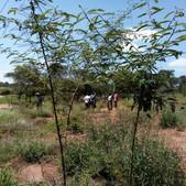 Assisted FMNR demonstration site in Matuu, Machakos County - Seedballs Kenya 1.jpg