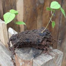 Seedballs kenya roots 2---.jpg