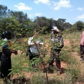 Assisted FMNR demonstration site in Matuu, Machakos County - Seedballs Kenya 2--.jpg