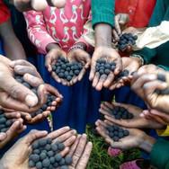 mugie school - seedballs kenya.jpg