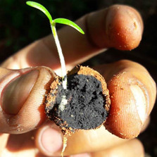 managu-seed-ball-Seedballs-Kenya.jpg