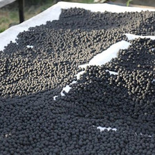 Drying Seedballs