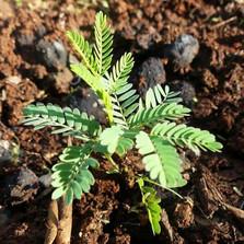 seed Seedballs Kenya 3.jpg