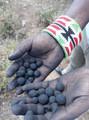 Seedballs Kenya DTB 26-.jpg