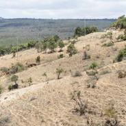 Soil Erosion - reforestation, Seedballs kenya 8-.jpg