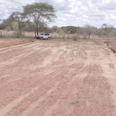 Assisted FMNR demonstration site in Matuu, Machakos County - Seedballs Kenya Beginning  2-