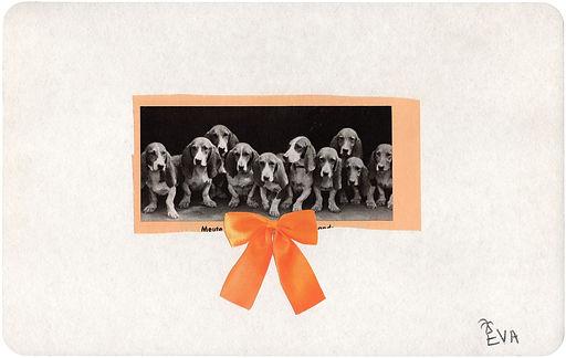 Beagles.jpg