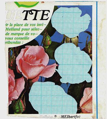 Little rose gone.jpg