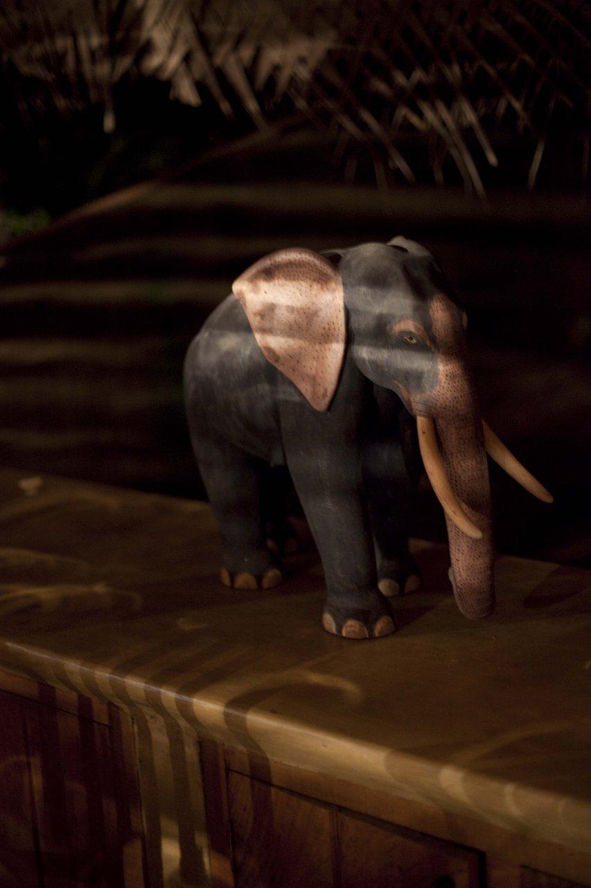 Elephant at night.