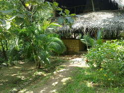 The guests garden