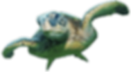 sea-turtle-transparent-3.png