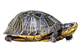 turtle-2.png