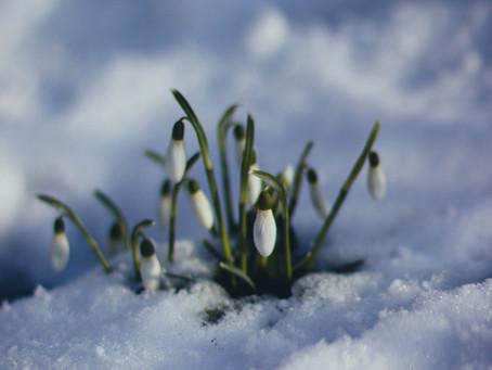 Det snør nynorsk A1
