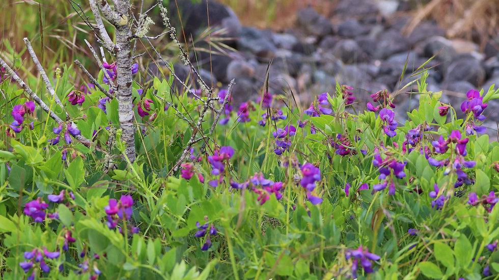 Blank Card - Wildlife/Nature Print - Wildflowers